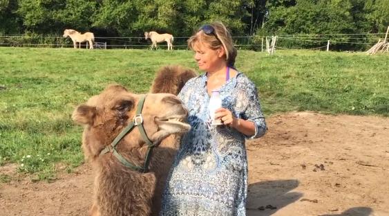 kamelstart