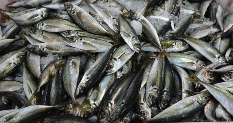 ansjoser sardiner forskel